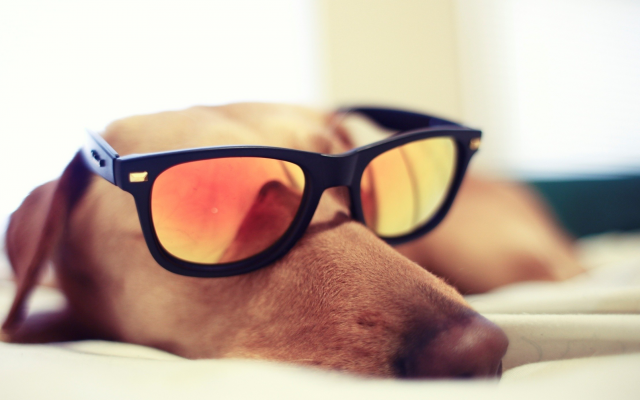2292x1395 pix. Wallpaper dog, glasses, sleeping