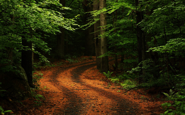 1920x1080 pix. Wallpaper nature, trees, forest, leaves, branch, path, plants, rock, moss, road