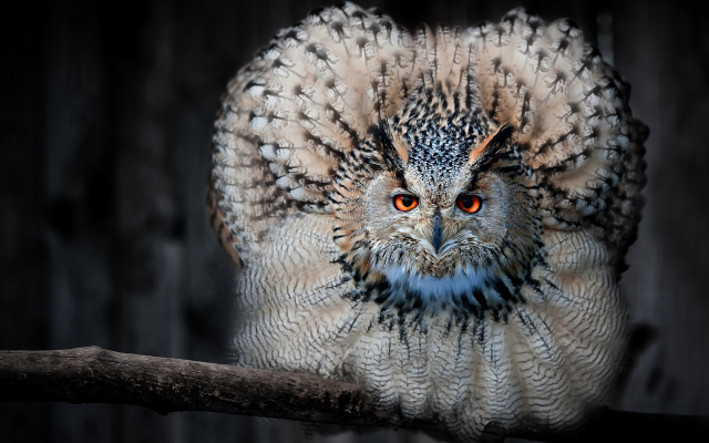2880x1801 pix. Wallpaper owl, animals, bird, feather