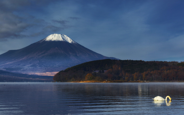 2500x1563 pix. Wallpaper Mount, Fuji, Japan, nature, landscape, mountains, volcano, snowy peak, lake, swans, trees, birds