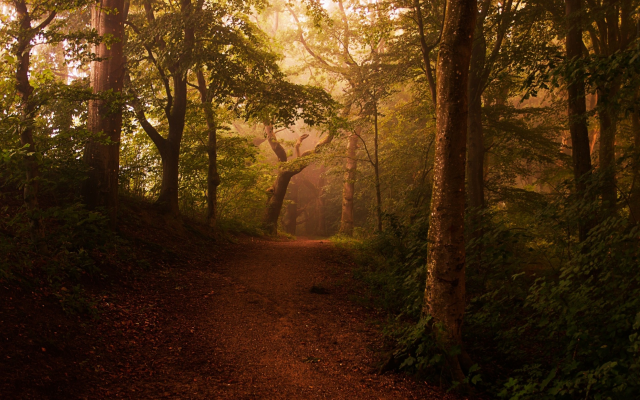 2500x1563 pix. Wallpaper road, path, mist, forest, shrubs, sunlight, trees, leaves, landscape, nature