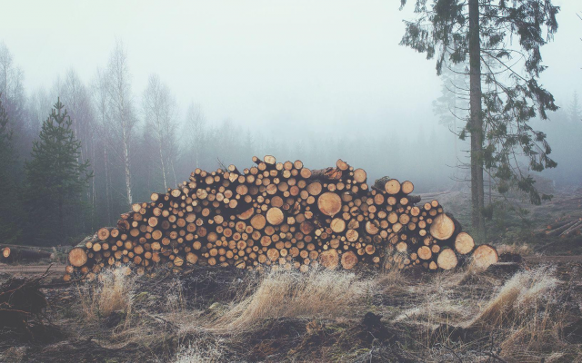 1920x1020 pix. Wallpaper mist, log, wood, forest, fog, nature