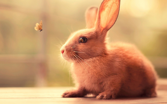 1920x1080 pix. Wallpaper rabbit, butterfly, animals, nature, insect