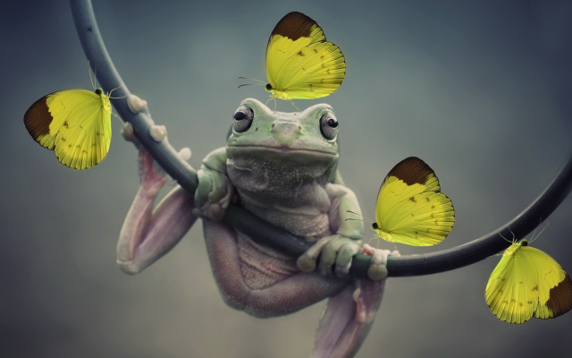 1920x1080 pix. Wallpaper frog, butterfly, animals, nature, closeup, amphibians, insect