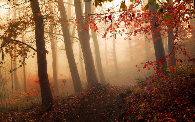 2500x1563 pix. Wallpaper mist, forest, autumn, path, morning, trees, leaves, nature