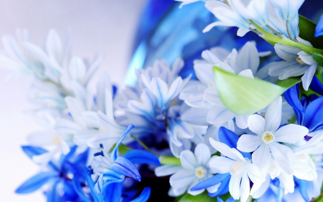 1920x1080 pix. Wallpaper flowers, nature, blue flowers