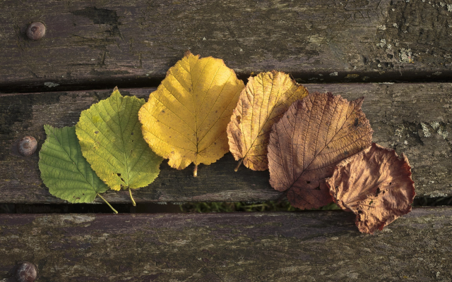 2560x1440 pix. Wallpaper autumn, leaf, leaves, wood, wooden surface