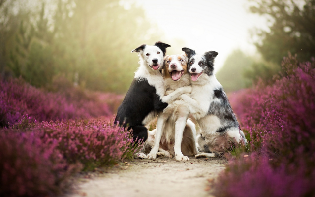 1920x1200 pix. Wallpaper Friends, dogs, flowers, mist, animals, nature, pets
