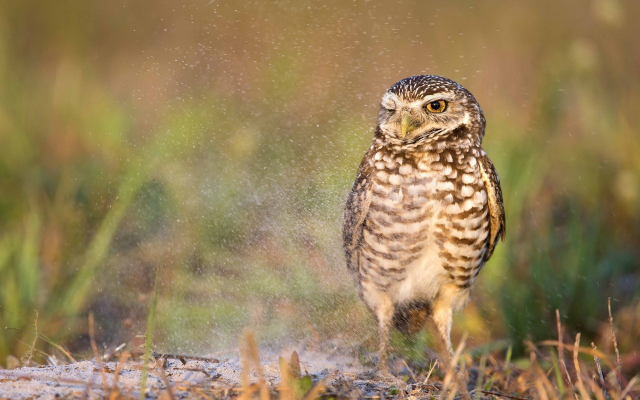 1920x1200 pix. Wallpaper owl, bird, animals, water drops, nature