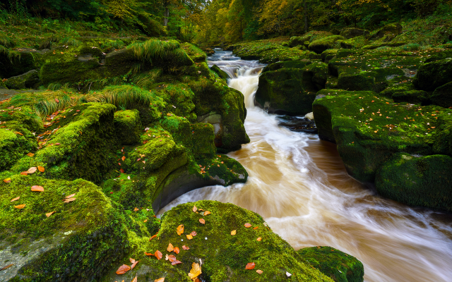 1920x1371 pix. Wallpaper moss, stream, river, nature, river wharfe, strid wood, bolton abbey, wharfedale, yorkshire dales