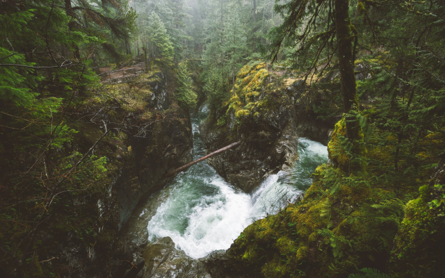 2000x1333 pix. Wallpaper vancouver island, british columbia, canada, nature, forest, river, waterfall, tree