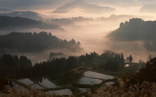 2500x1563 pix. Wallpaper nature, landscape, mist, sunrise, valley, forest, mountain, terraces, water, trees, Japan