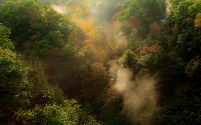 1920x1200 pix. Wallpaper nature, landscape, fall, forest, mountain, mist, morning, trees, sunrise