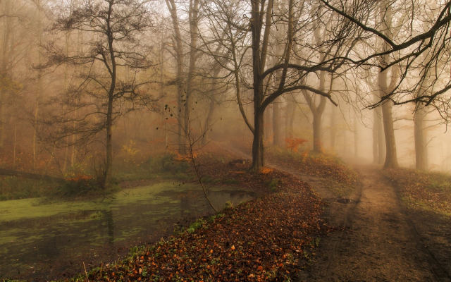 1920x1200 pix. Wallpaper nature, landscape, morning, fall, mist, park, trees, path, leaves, ponds, water