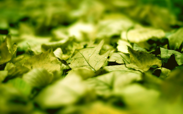 1920x1200 pix. Wallpaper leaves, macro, green, sunlight, blurred, photography