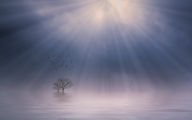 1920x1200 pix. Wallpaper nature, sunbeams, mist, lake, sunrise, landscape, trees, atmosphere, birds, flying, calm, morning