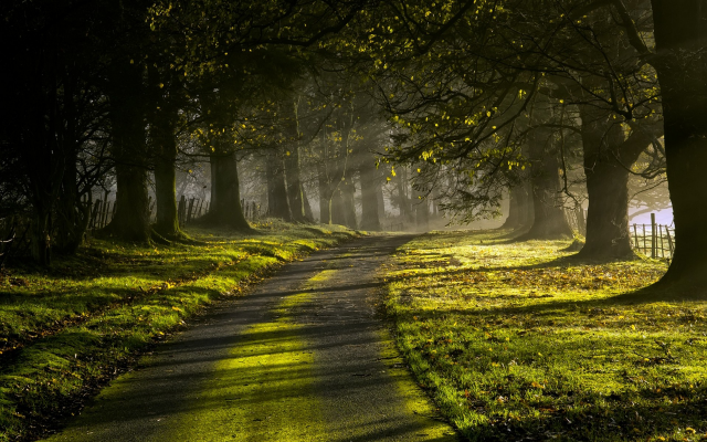 1920x1200 pix. Wallpaper nature, landscape, sun rays, road, trees, sunrise, grass, green, fence, leaves, mist, moss, morning