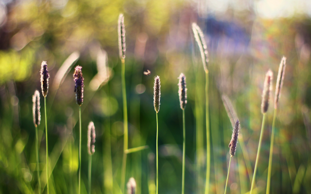 3769x2529 pix. Wallpaper grass, insects, spikes, bokeh, nature