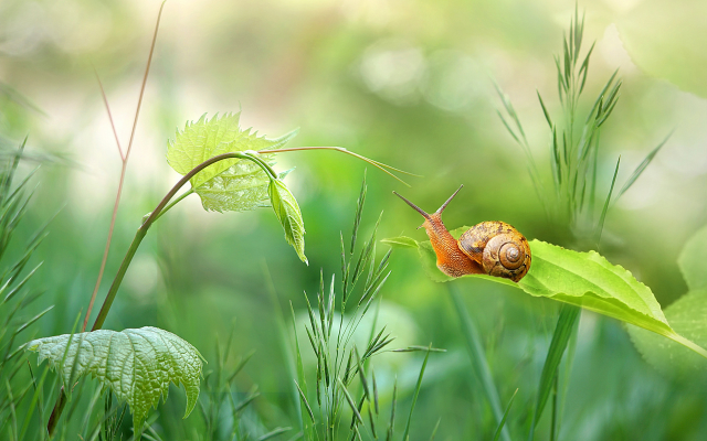 2048x1179 pix. Wallpaper summer, grass, snail, close-up, nature