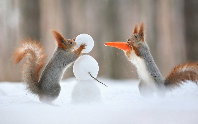 1920x1200 pix. Wallpaper squirrel, carrot, snowman, winter, humor, animals, christmas