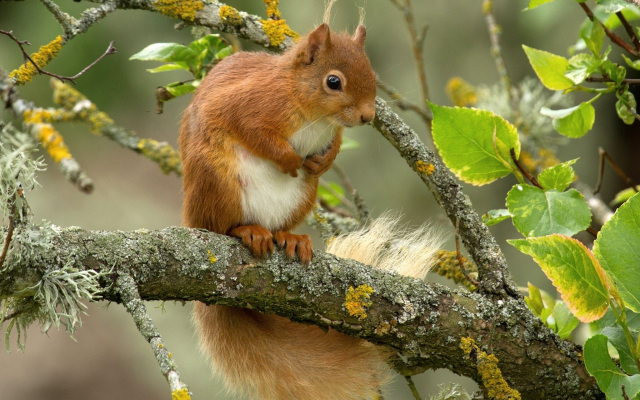 2048x1416 pix. Wallpaper squirrel, animals, branch, leaf