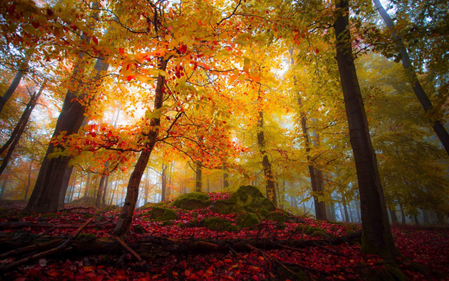 1920x1200 pix. Wallpaper landscape, nature, forest, fall, colorful, trees, leaves, sunlight, mist