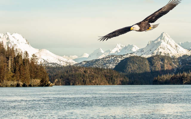 3840x2160 pix. Wallpaper bald eagle, alaska, gulf, sea, mountains, bird, animals, nature