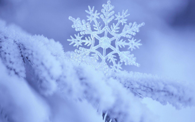 2560x1600 pix. Wallpaper snowflake, frost, macro photo, nature, snow, winter