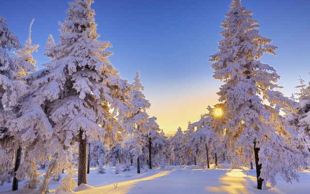 1920x1080 pix. Wallpaper winter, snow, tree, sun, clear sky, nature, snowy forest