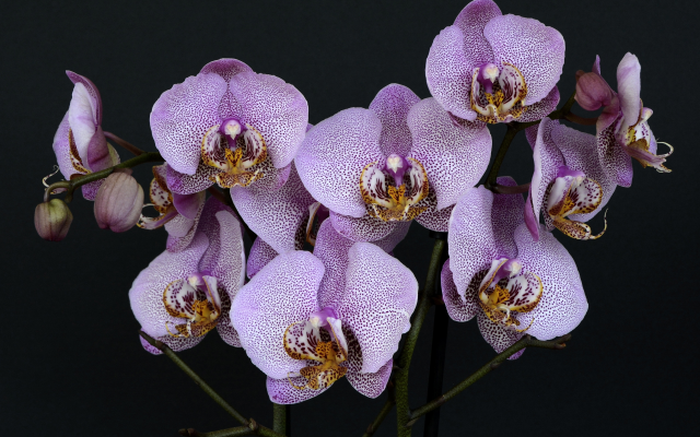 3840x2560 pix. Wallpaper orchids, flowers, leaves, nature, bloom, exotic