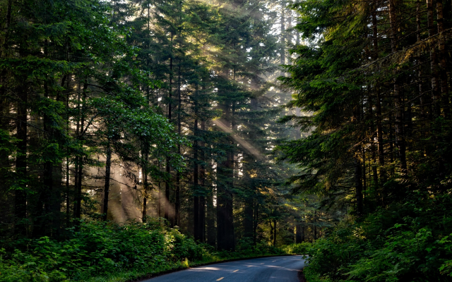 2201x1467 pix. Wallpaper forest, tree, sunlight, nature, scenic road, nature