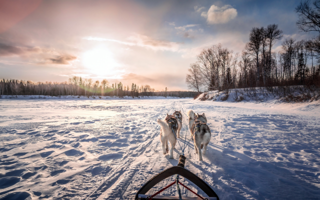 2560x1551 pix. Wallpaper snow, winter, river, dog, husky, animals, sled