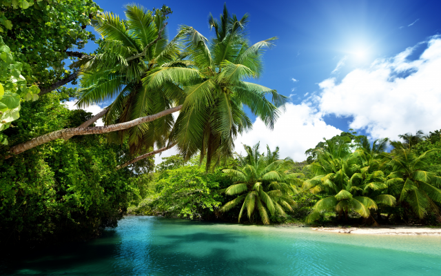 6536x4358 pix. Wallpaper nature, summer, beautiful, palm trees, tropics, seychelles, palm, sea