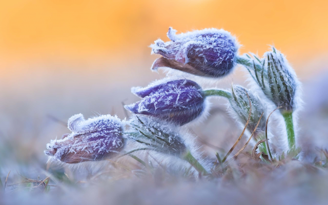 2560x1592 pix. Wallpaper wildlife, photo, flowers, frost, spring, nature