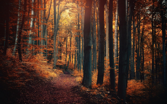1920x1200 pix. Wallpaper nature, forest, path, fall, landscape, leaves, trees, shrubs, sunlight, fairy tale
