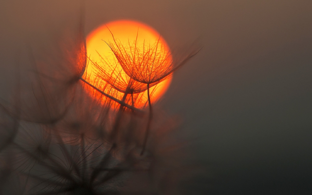 1920x1280 pix. Wallpaper dandelion, sun, macro, sunset, nature