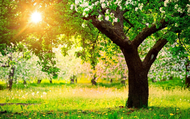 1920x1200 pix. Wallpaper tree, spring, sun, flowers, grass, nature