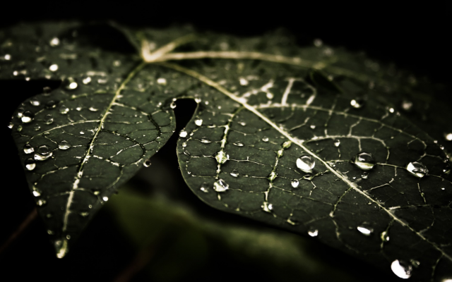 1920x1080 pix. Wallpaper water drops, leaves, nature
