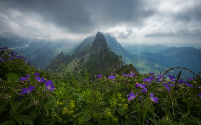 2048x1365 pix. Wallpaper switzerland, alps, mountains, forest, overcast, clouds, nature