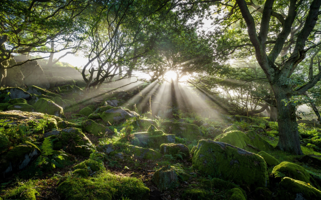 2048x1280 pix. Wallpaper moss, sun rays, tree, stones, nature