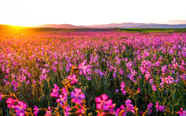 2048x1152 pix. Wallpaper wild flowers, nature, field, sunrise, pink flowers
