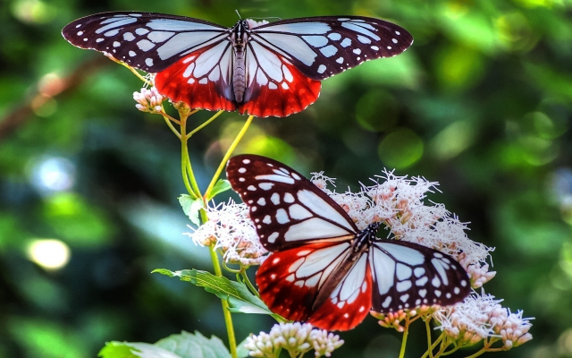 1920x1080 pix. Wallpaper butterfly, bright, flower, insect, animals