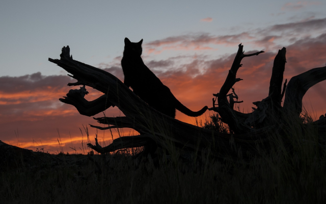 2048x1222 pix. Wallpaper clouds, nature, cat, silhouette, sunset, animals