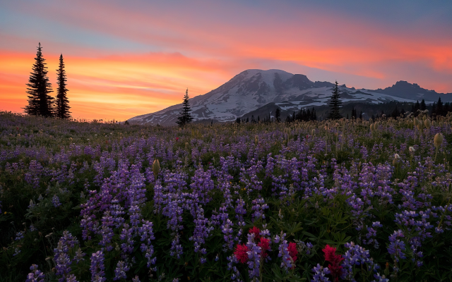 2048x1303 pix. Wallpaper mount rainier, washington, sunlight, nature, sky, flowers, mountains