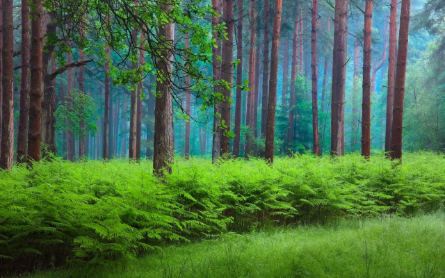 2048x1366 pix. Wallpaper nature, forest, spring, fern, trees