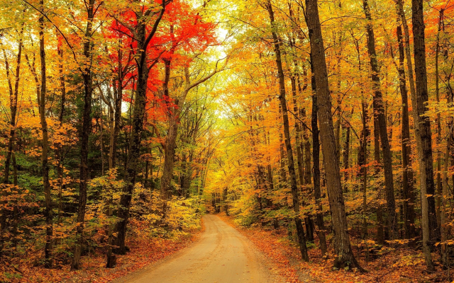 2048x1212 pix. Wallpaper autumn, leaf, nature, forest, country road