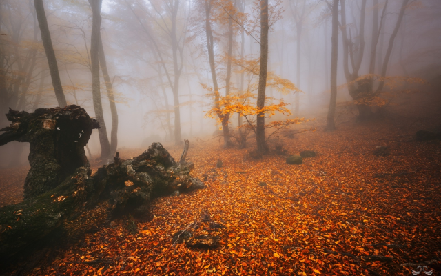 1920x1282 pix. Wallpaper forest, trees, fog, autumn, nature, leaf