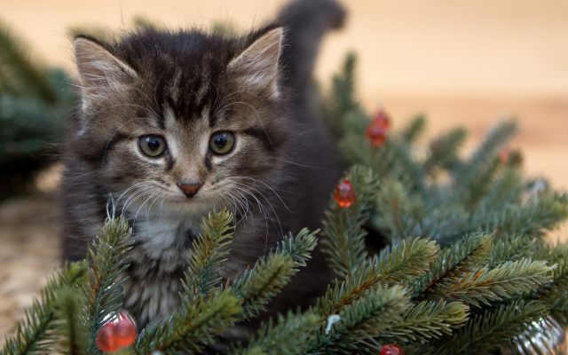 4156x2770 pix. Wallpaper animals, kitten, cat, branch, tree