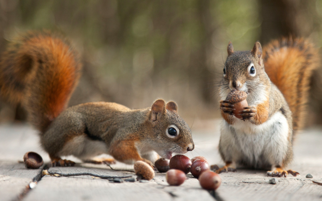 2048x1152 pix. Wallpaper acorns, autumn, animals, squirrel