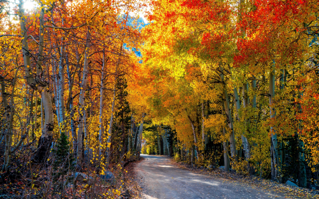 7867x5172 pix. Wallpaper nature, autumn, forest, trees, leaves, road